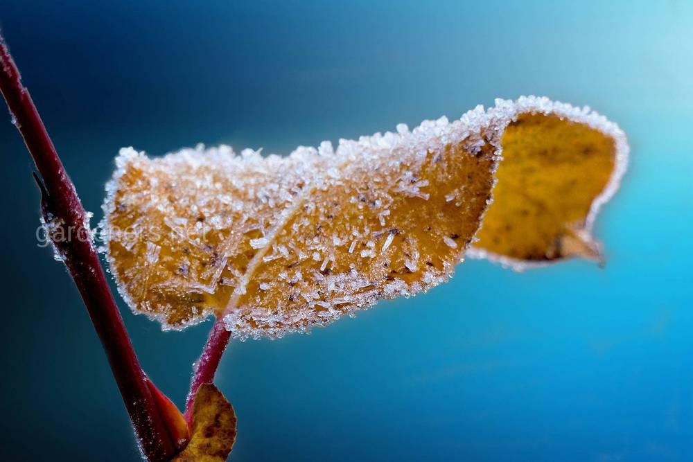 Мороз и заморозки