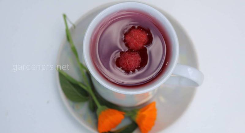 Как вылечить кашель с помощью чая из лекарственных растений? Лучшие рецепты