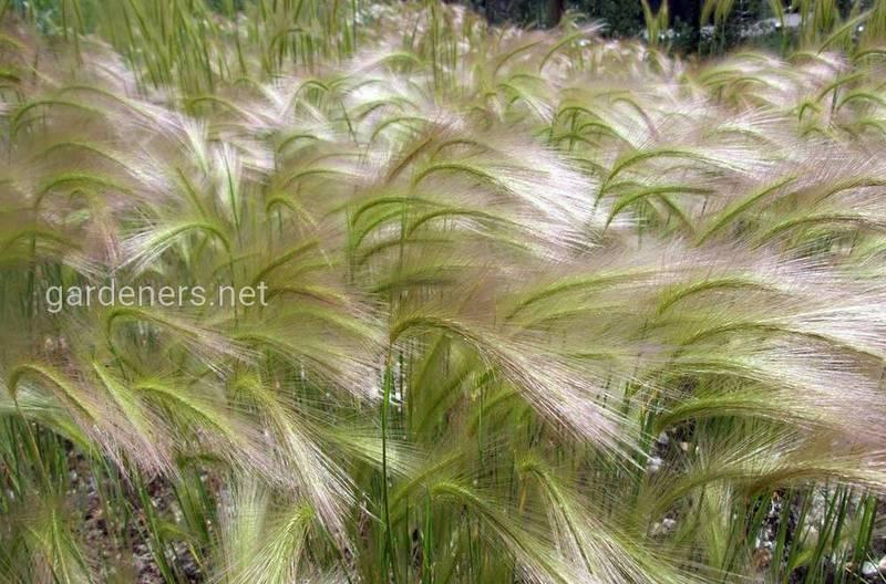 Як позакореневе підживлення фосфором впливає на зріст кореневої системи рослин?
