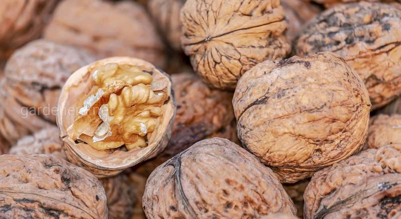 Зачем и как морозить орехи