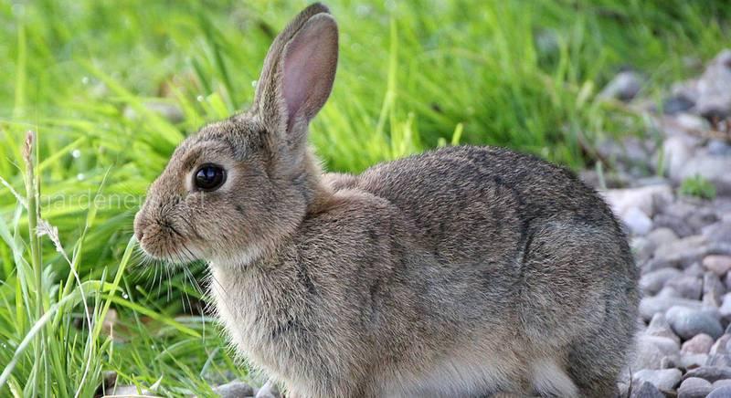 Чтобы домашний кролик жил дольше