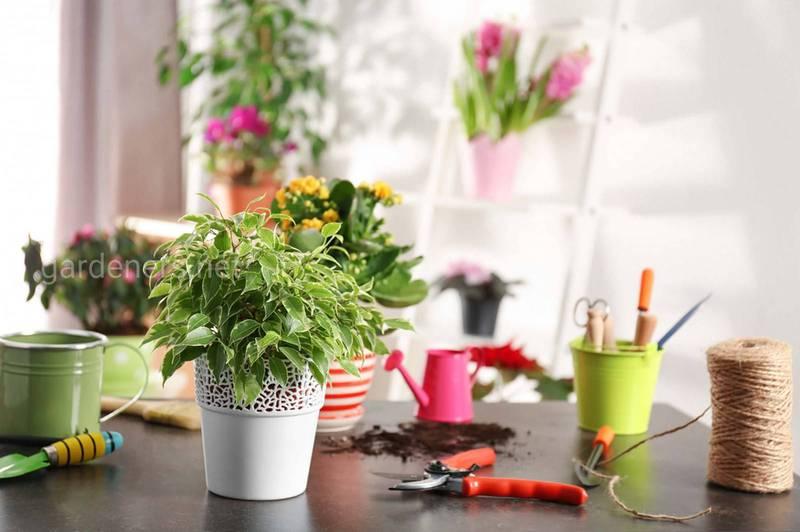 Підживлення і захист кімнатних квітів домашніми засобами