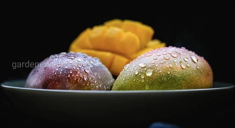Правила дозрівання екзотичних фруктів