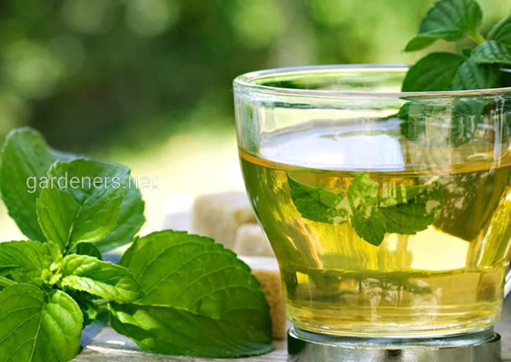Мятно-зверобойный чай