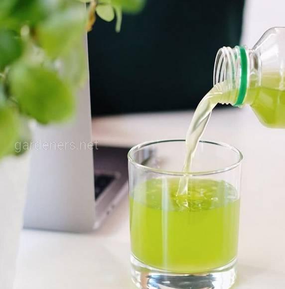напиток из живой микроводоросли Хлорелла