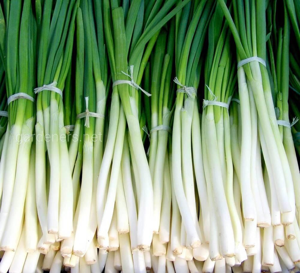 Варианты замораживания зеленого лука на зиму