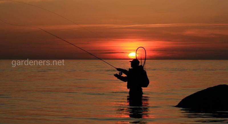 Основные моменты, влияющие на клев рыбы