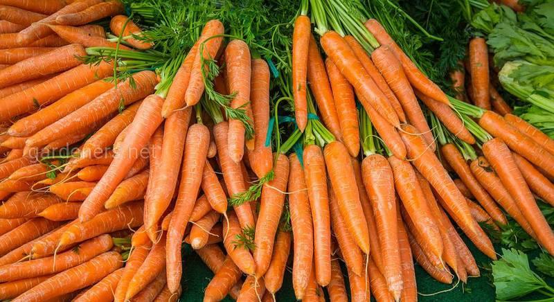 рецепты из моркови.jpg