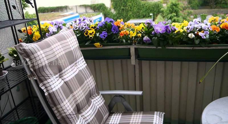 Цветы, с которыми балкон будет выглядеть неотразимо в течение осени