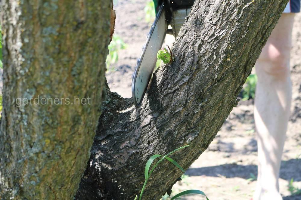 Спиливание деревьев на собственном участке