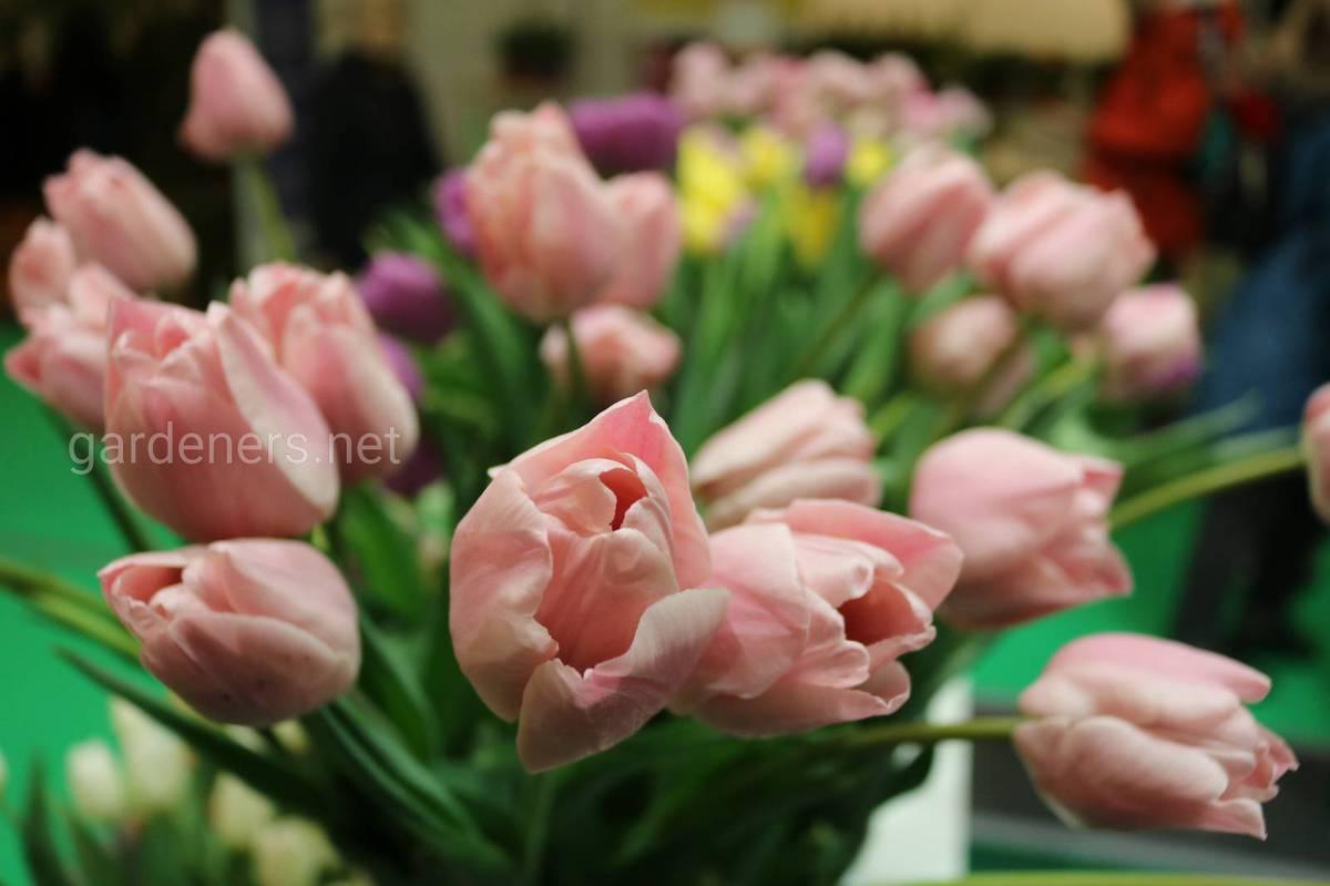 Огромный перечень цветов