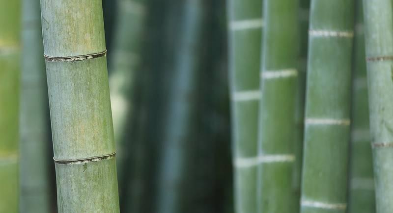 bamboo-919052_1920.jpg
