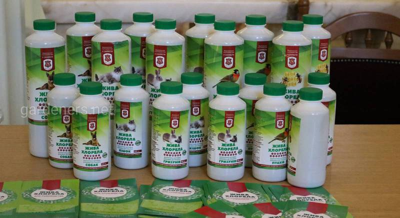 Жива хлорела - справжній енергетичний коктейль для ваших рослин.JPG