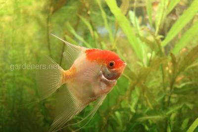 рыбки в доме природы.JPG