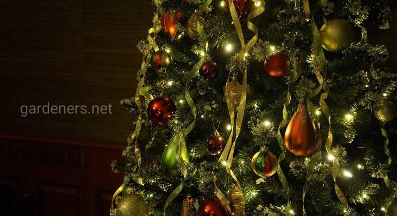 Новий рік-2021: де святкувати, ідеї для подарунків, святкових страв, нарядів та декору