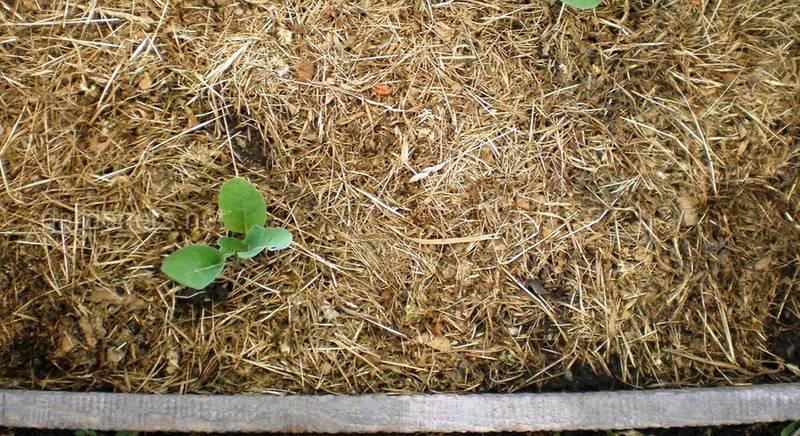 Мульчирование в теплице: повышаем влажность и боремся с сорняками