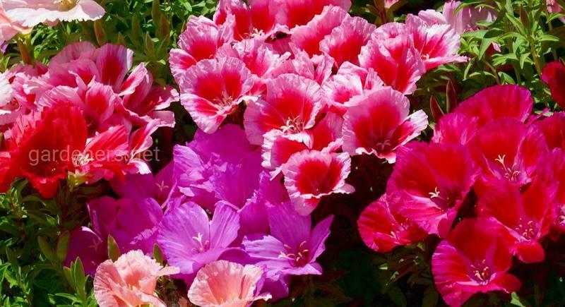 Какие цветы сеять на зиму?