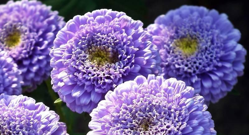 flowers-3047326_1920.jpg