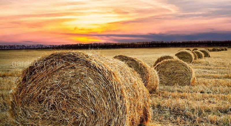 Ответы на самые популярные вопросы о заготовке и хранении сена