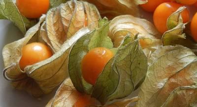 ягоды физалиса.jpg