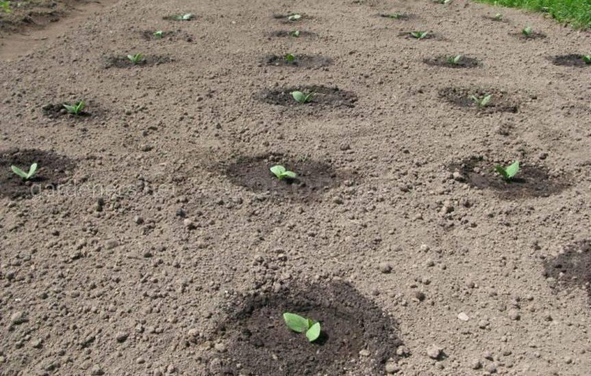 Посев огурцов в июле