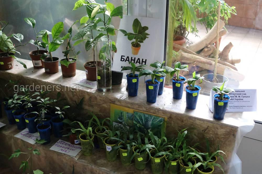 распродажа растений ботанический сад