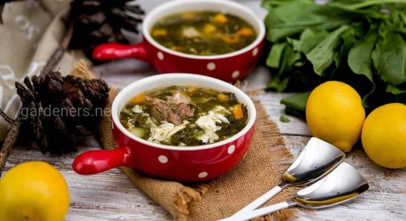 Рецепты супов со щавелем