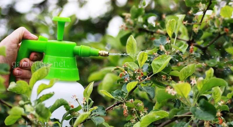 Обработка сада инсектицидами весной