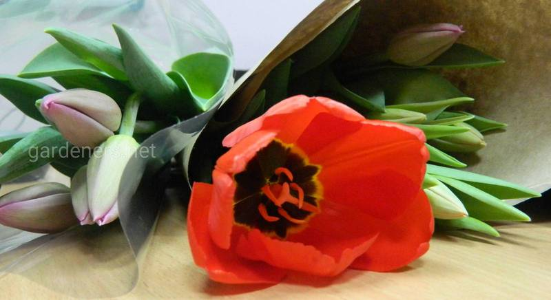 Советы как сохранить тюльпаны как можно дольше