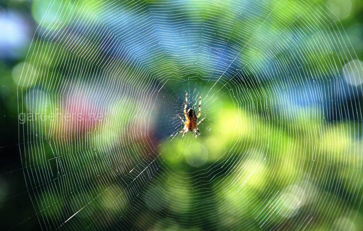 Что привлекает пауков