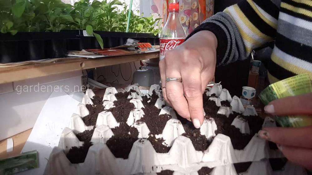 Контейнер з-під яєць для вирощування зелені
