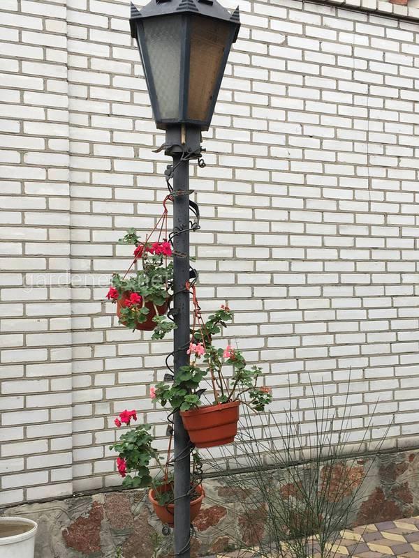 Як правильно доглядати за кімнатними рослинами в зимовий час?