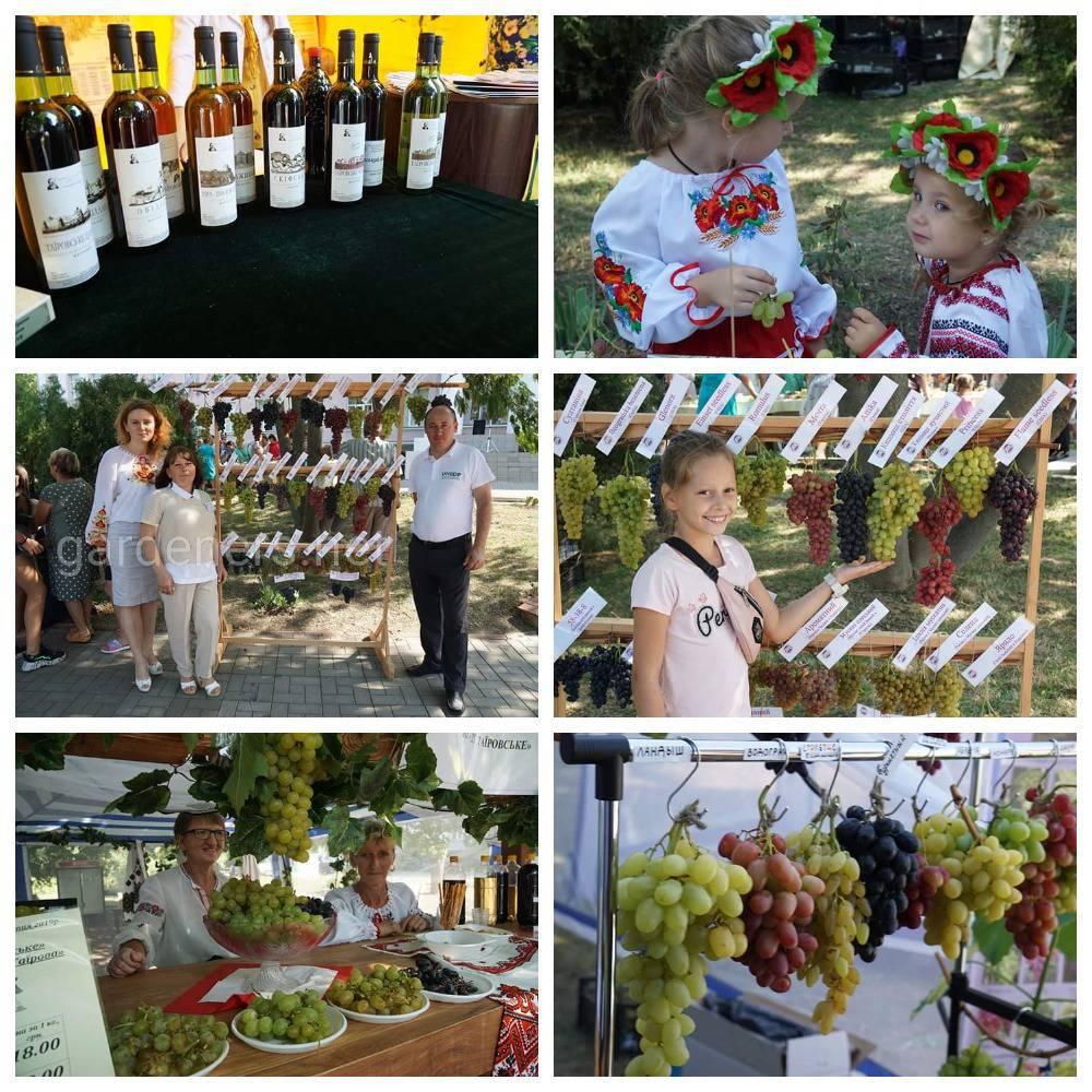 профессионалы и любители виноградной лозы Украины