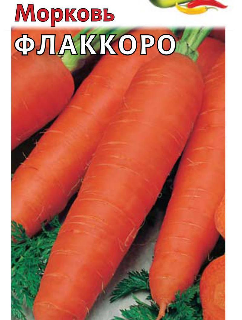 Сорт моркови Флаккоро