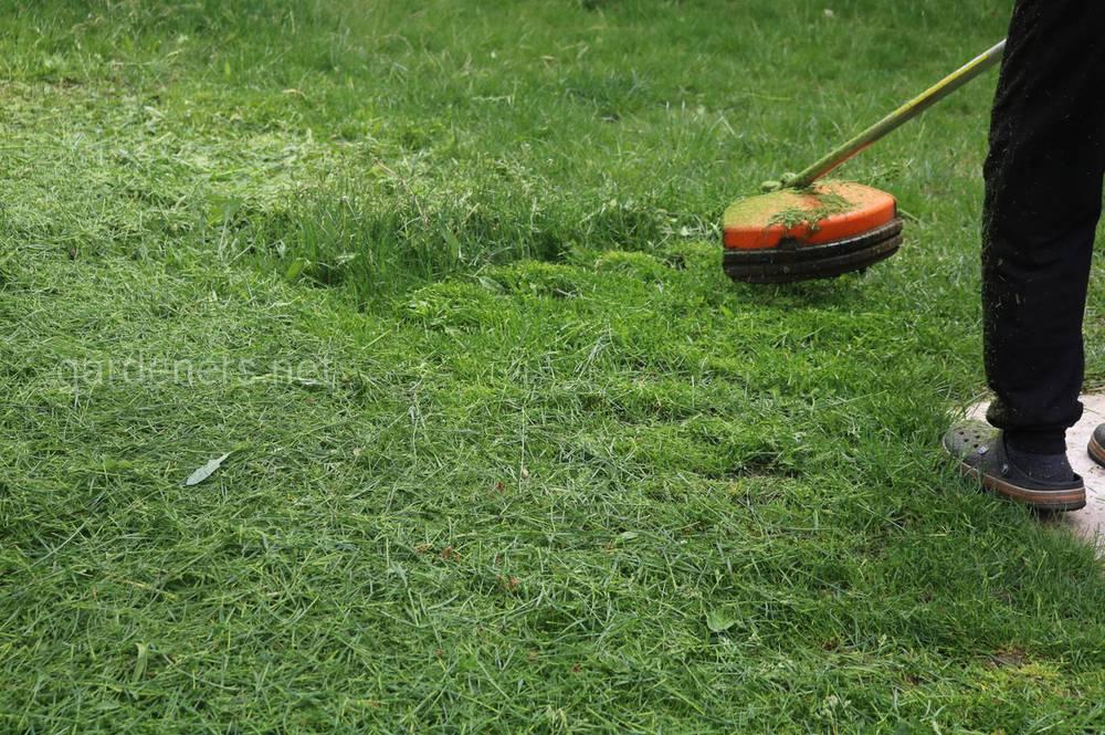 Как восстановить поврежденный газон