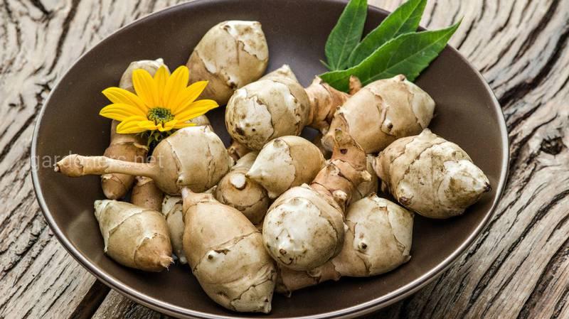 Топінамбур - чудовий замінник картоплі