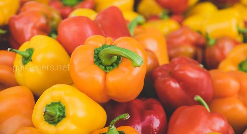 """Овощи """"папричного"""" назначения: топ-3 сорта сладкого перца, из которых получится ароматная паприка"""