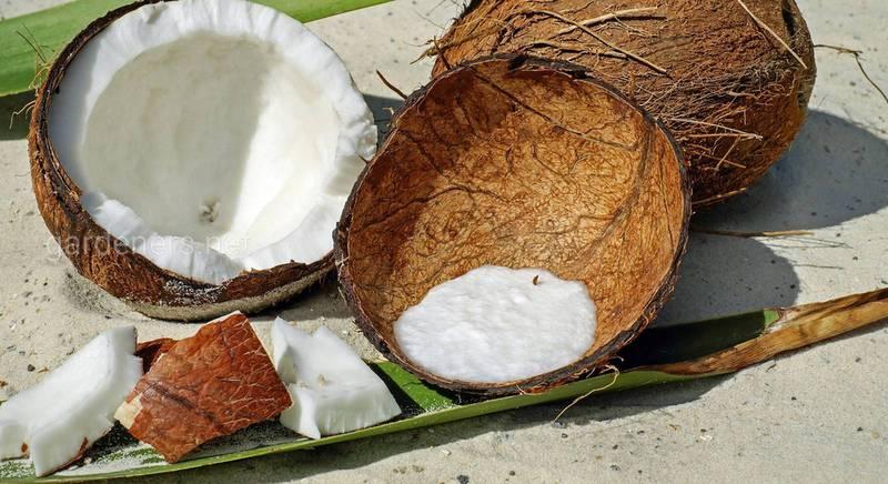 14 интересных фактов о кокосах