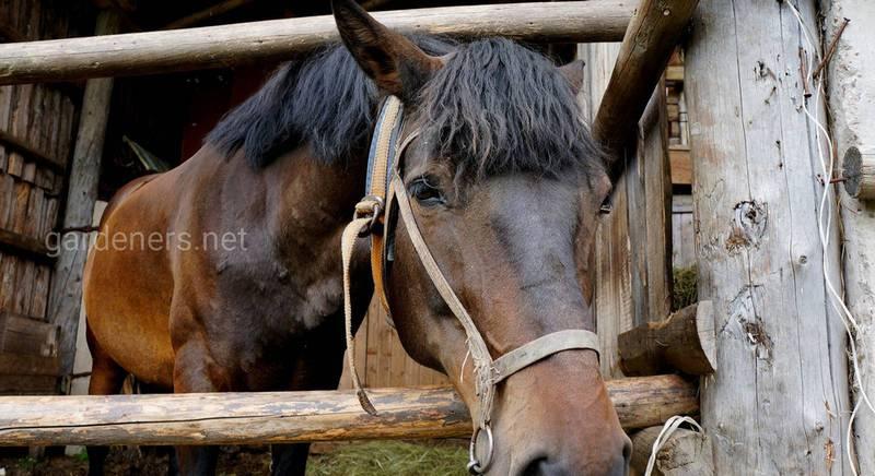 Які масті коней бувають