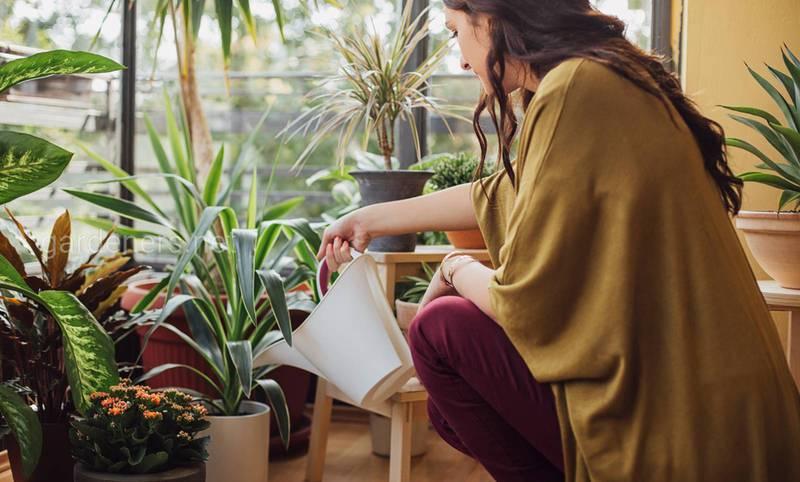 Как ухаживать за цветами зимой в помещениях с отоплением?