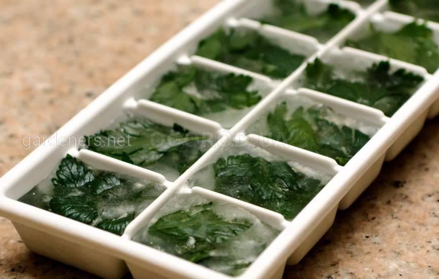 Как правильно заморозить зелень2