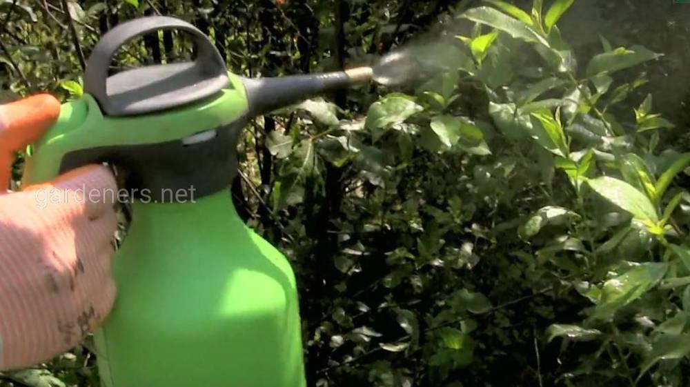 обработка зеленым мылом