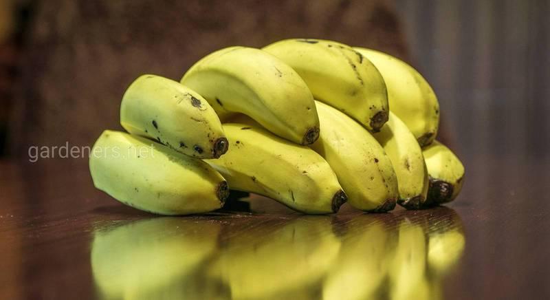 Що приготувати з бананів