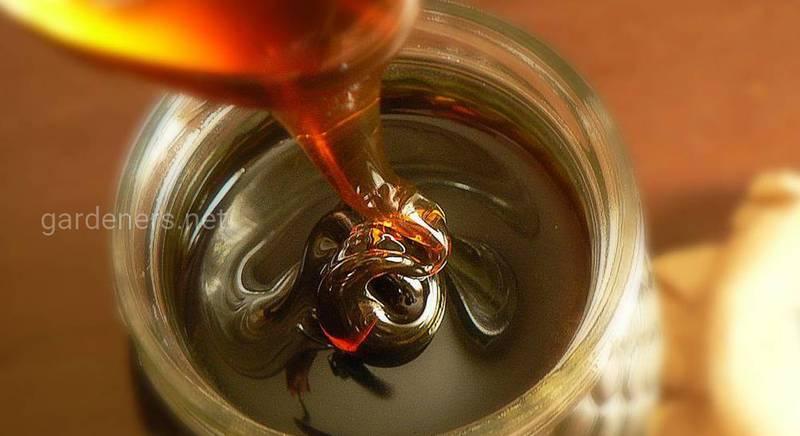 Польза и лечебные свойства падевого меда