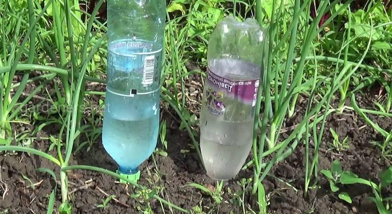 Система капельного полива растений из пластиковых бутылок