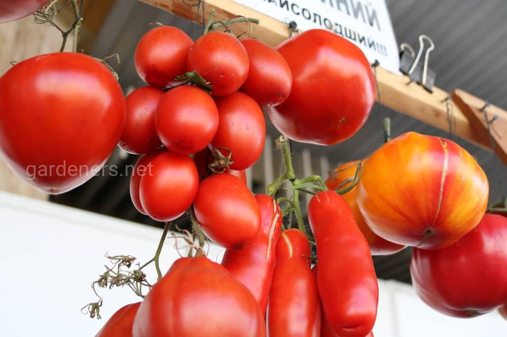 коллекция томатов