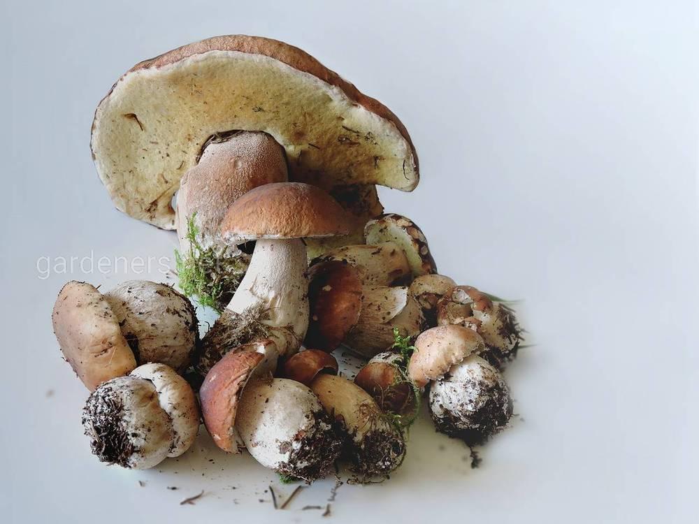 Как быстро и легко заморозить грибы дома