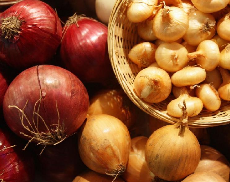 Какие болезни и вредители влияют на сохранность головки лука?