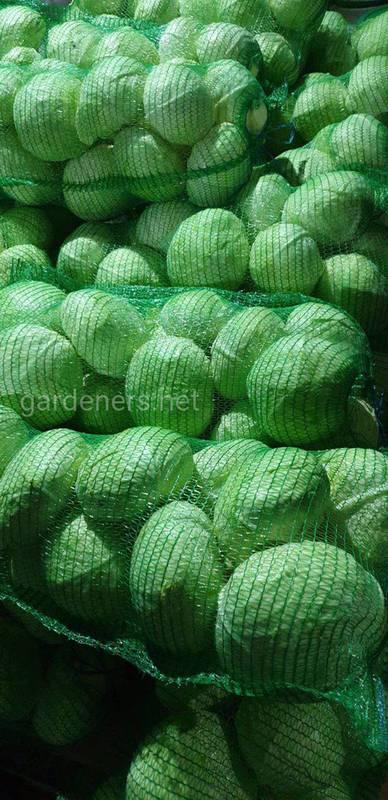 Хранение овощей: что влияет на качество и свежесть?