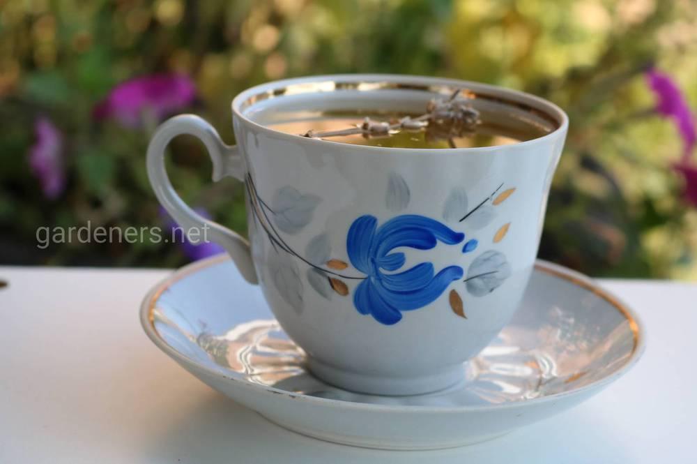 Листя суниці вживають у вигляді настоїв, чаїв